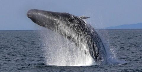 sperm-whale-04_69245_1